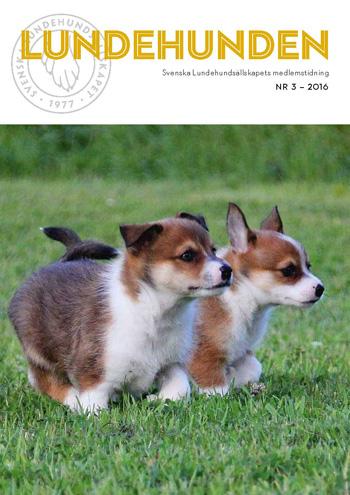lundehunden_3-2016_350